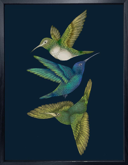 'Antique Hummingbirds III' Indigo Fine Art Print