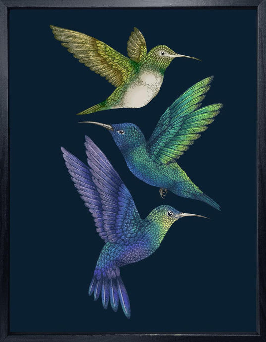 'Antique Hummingbirds II' Indigo Fine Art Print
