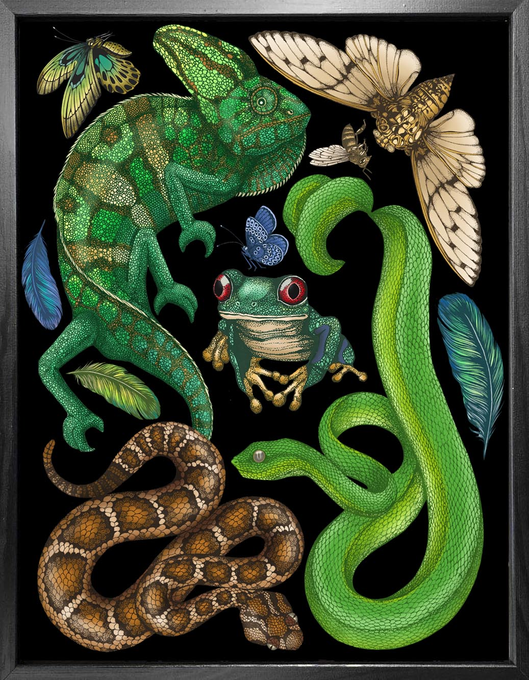 'Antique Reptiles & Amphibians - Black' Fine Art Print