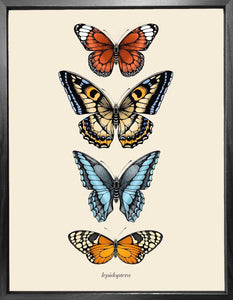 'Antique Tropical Butterflies III' Fine Art Print