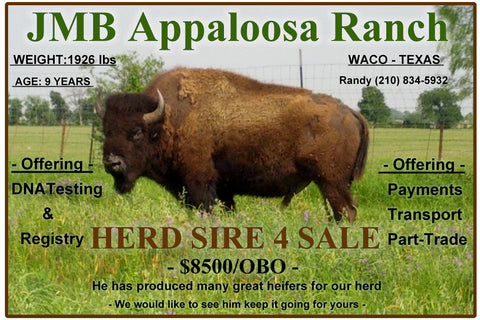 Bison for sale