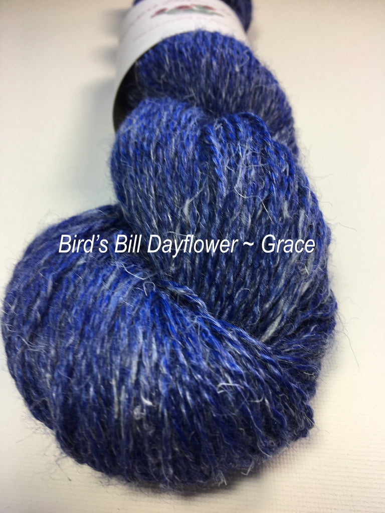 Bird's Bill Dayflower
