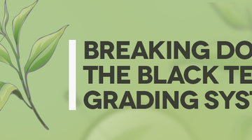 Breaking Down The Black Tea Grading System