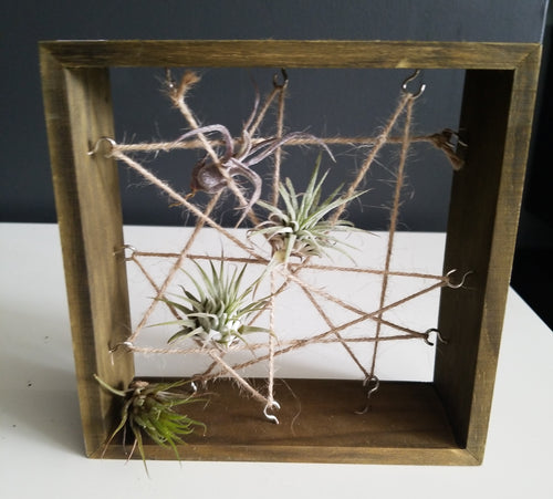 Airplant Frame
