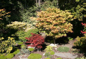 Growing Japanese Maples in Hard Water Areas