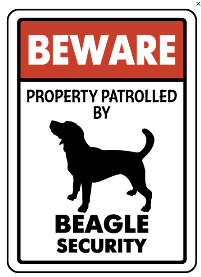 Beagle on patrol