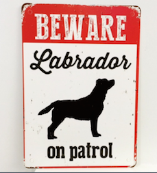 Labrador on patrol