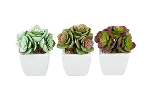 Vera Artificial Succulents, Set of 3