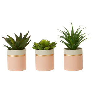 Vera Set of 3 Artificial Succulents, Pink / Gold