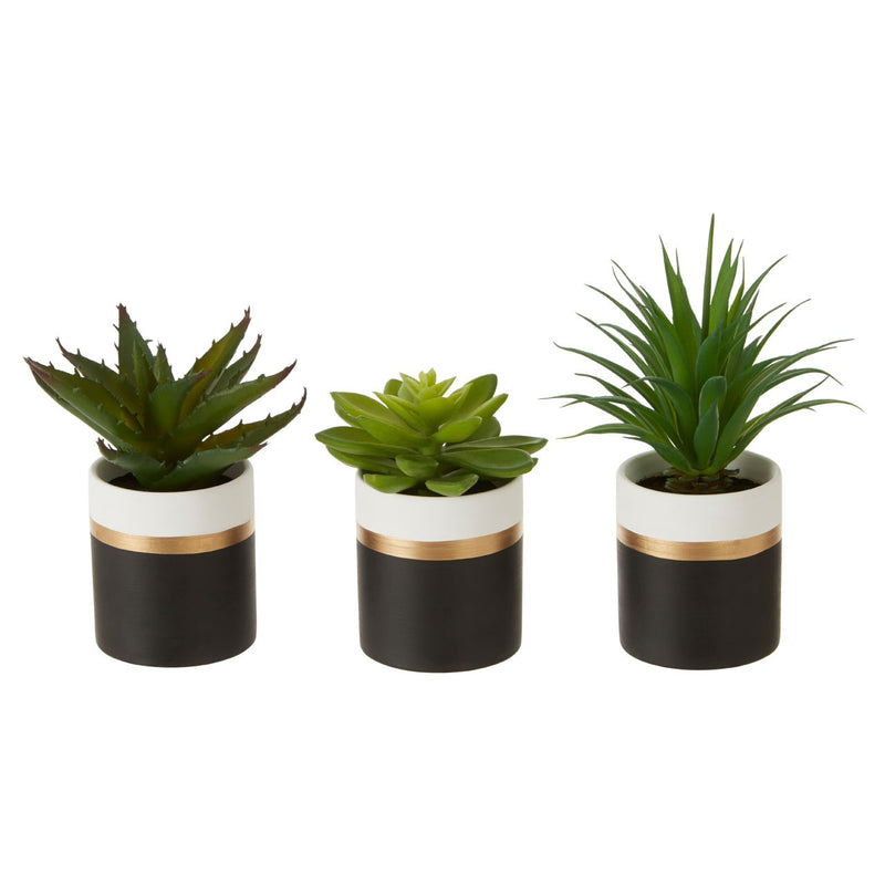 Vera Set of 3 Artificial Succulents, Black / Gold