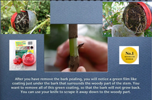 Load image into Gallery viewer, CUTTING GLOBE PROPAGATORS AND GARDEN PRODUCTS