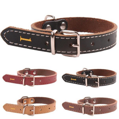 Leather Dog Collar Accessory, All Sizes, Variety of Colours.