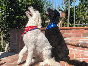 Patriotic Pet Bandanas;  Blue, Red, Silver, Gold with Stars.
