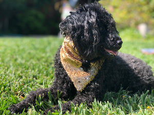 Matte Gold and Matte Black Flip Sequin Pet Bandana.