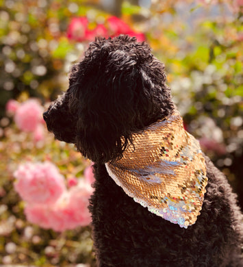 Iridescent White and Gold Flip Sequin Pet Bandana.