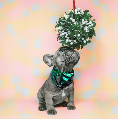 Holiday Green Sequin Pet Bandana