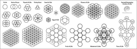 Flower of Life Stages