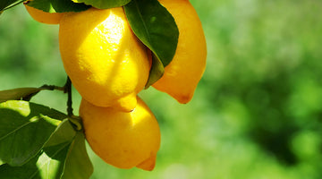 LIMONENE: The Terpene with a Citrus Twist