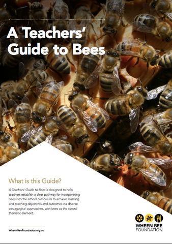 a teachers guide to bees