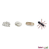 Life Cycle of an Ant - Sticks & Stones Education
