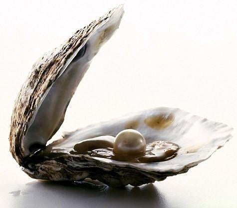 Oysters for Live Show (Choose Date)