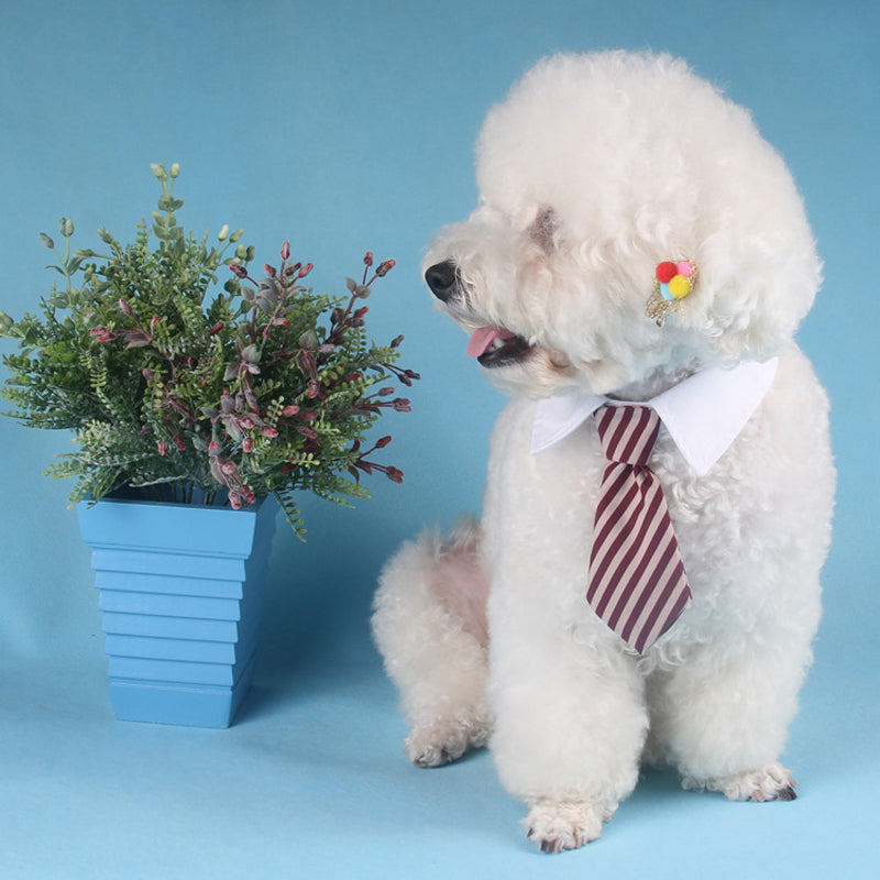 Mr.Professional Neck Tie