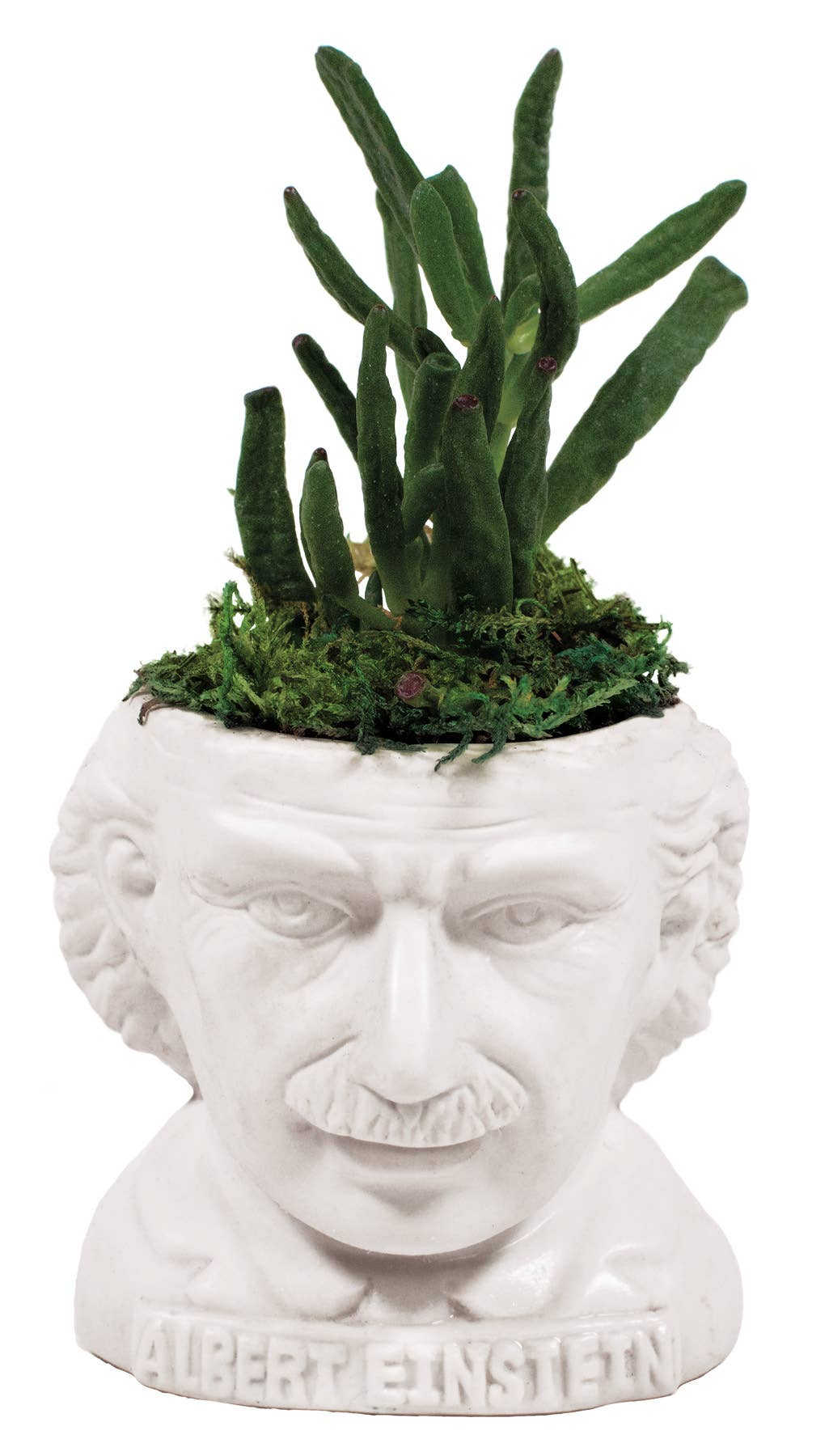 Unemployed Philosophers Guild - Albert Einstein Planter
