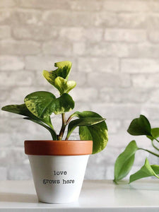 Bolt & Rally - Love Grows Here Planter
