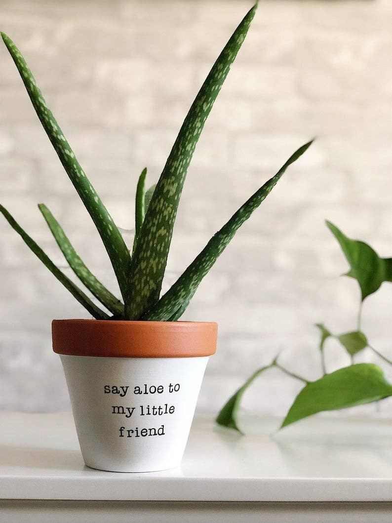 Say Aloe to My Little Friend Planter