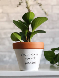 Bloom Where You Are Planted Planter