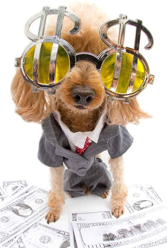 How much do you spend on your dog?