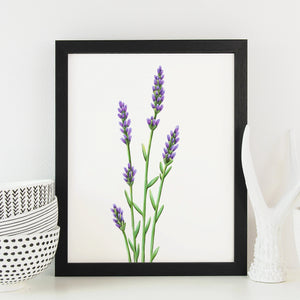 Lavender Art Print - June Poppies Designs