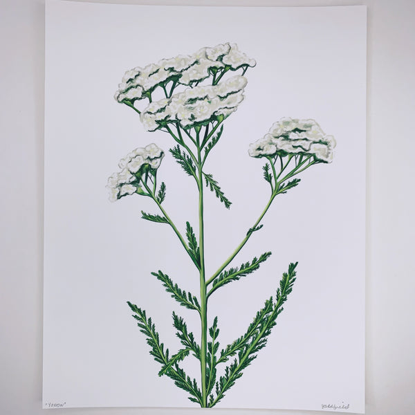 Yarrow Art Print - June Poppies Designs