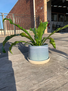 Large Planter with Drip Tray - Ocean