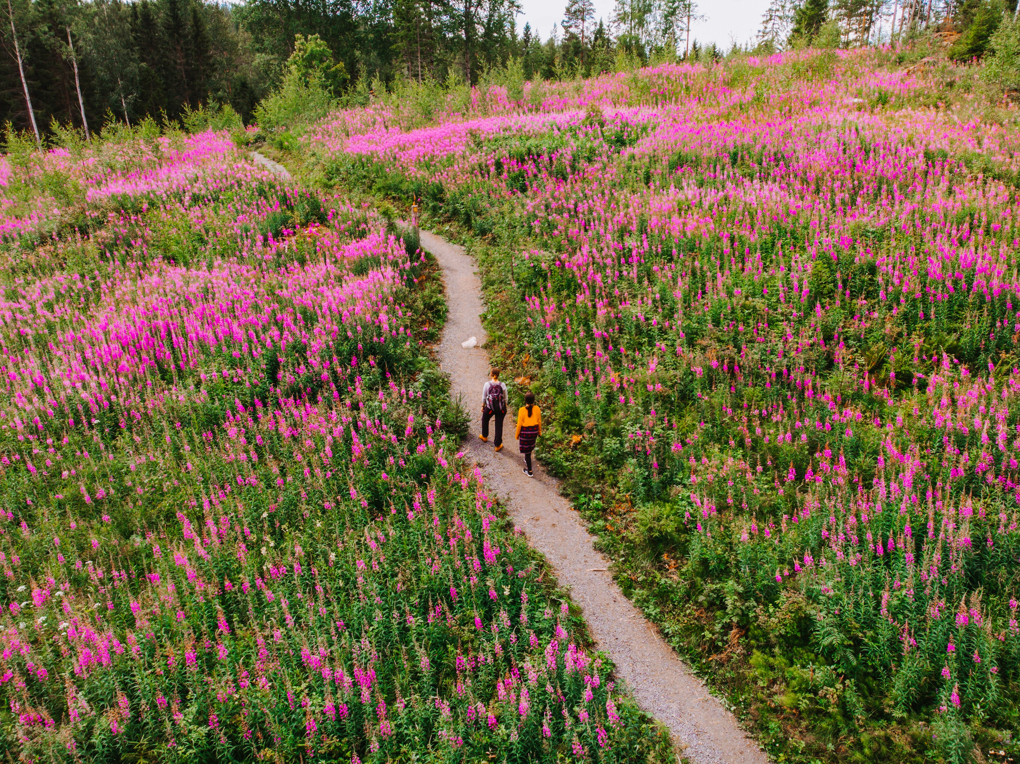 Landscape in Finland - hiking in a national park