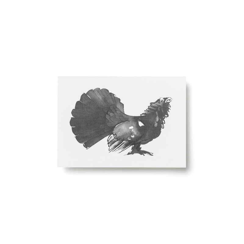 Teemu Järvi FOREST GREETINGS Single Animal Post Card (4 x 6) Capercaillie
