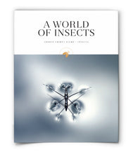 A World of Insects