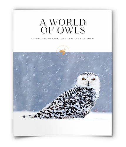 A World of Owls