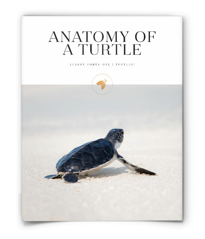 Anatomy of a Turtle