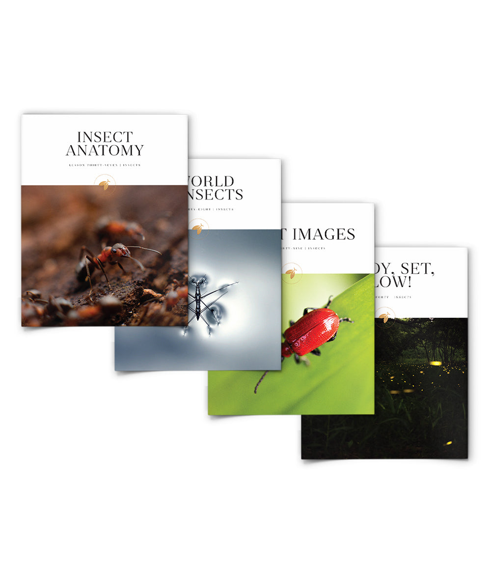 Insects Bundle