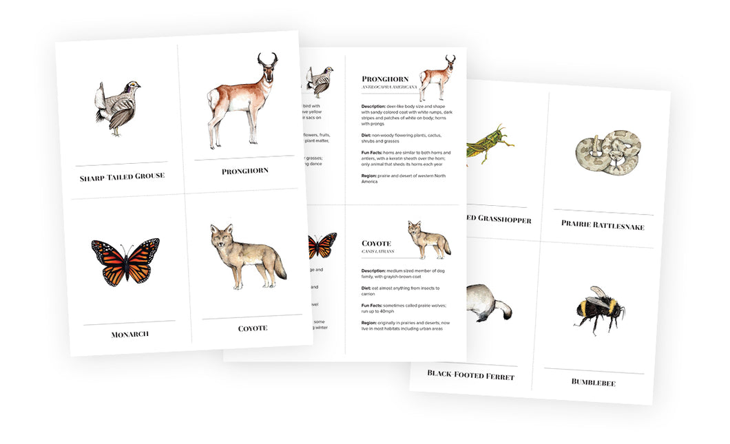 Learning Cards - Prairie Animals