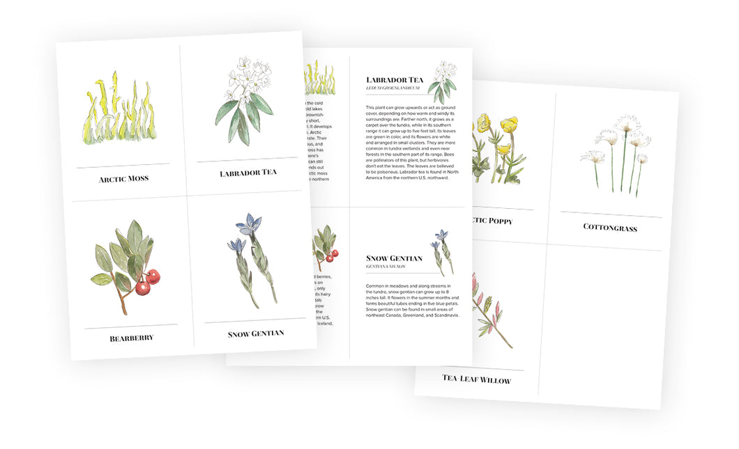 Learning Cards - Frozen Plants
