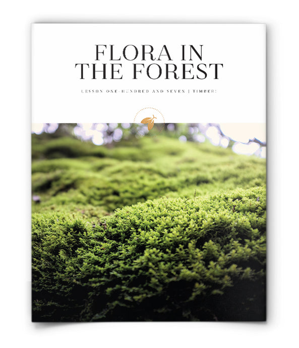 Flora in the Forest