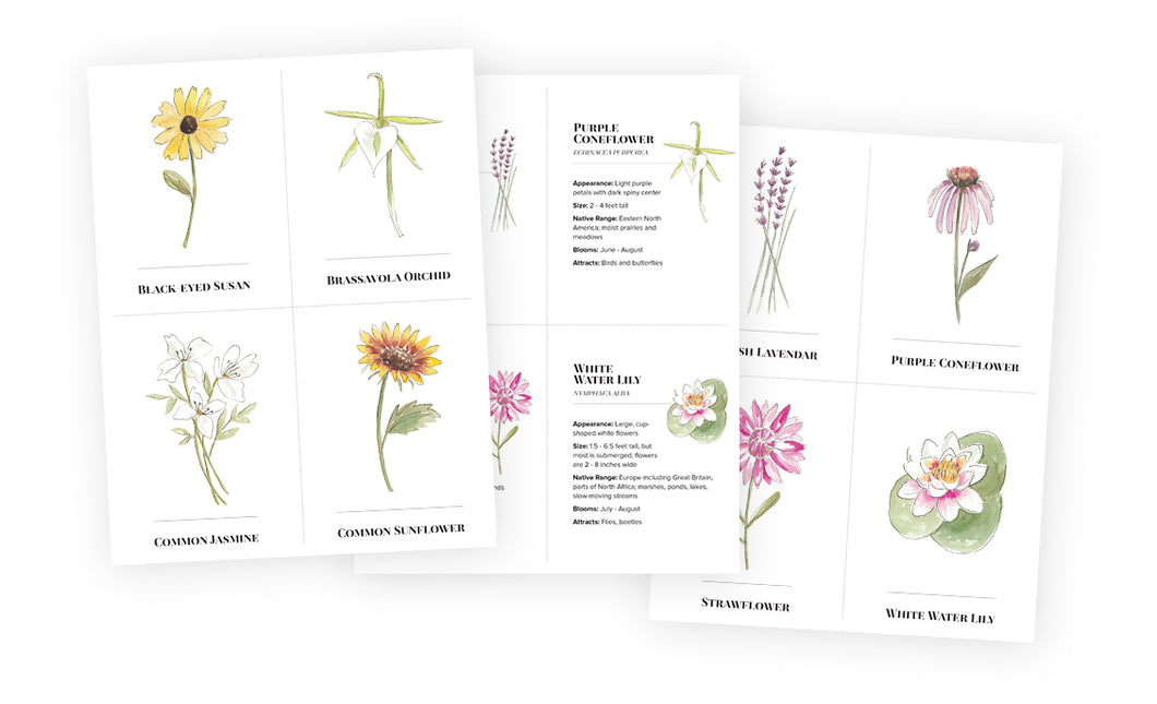 Flash Cards - Wildflowers