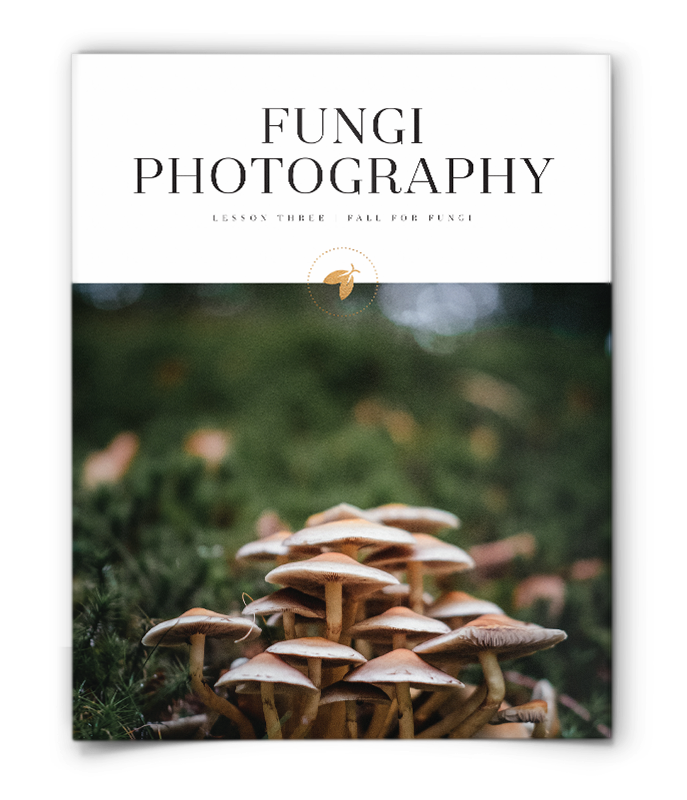 Cover page of fungi photography lesson plan