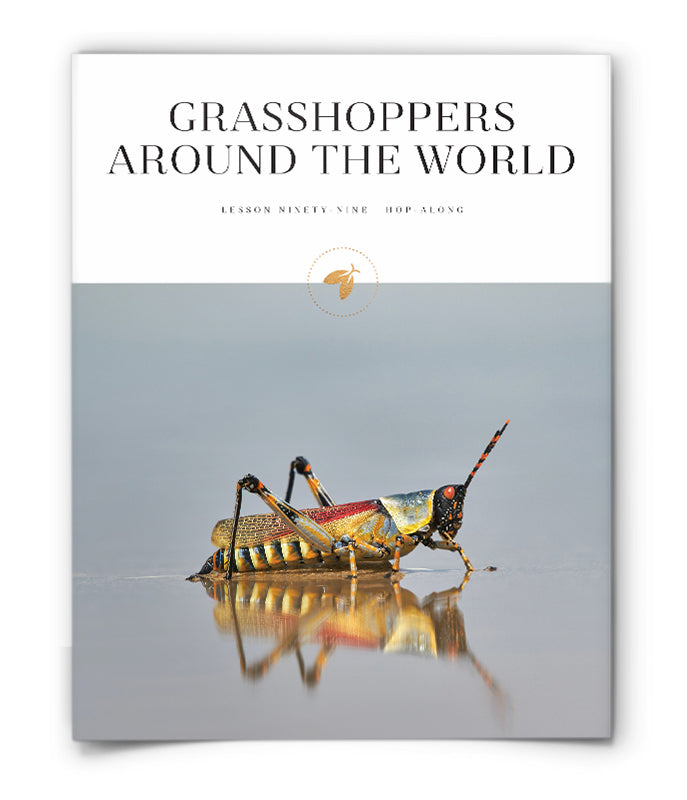 Grasshoppers Around the World