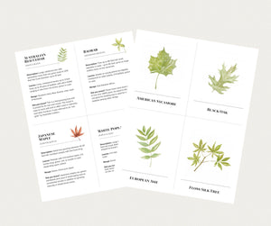 Learning Cards - Leaves
