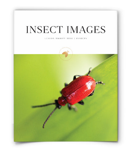 Insect Images