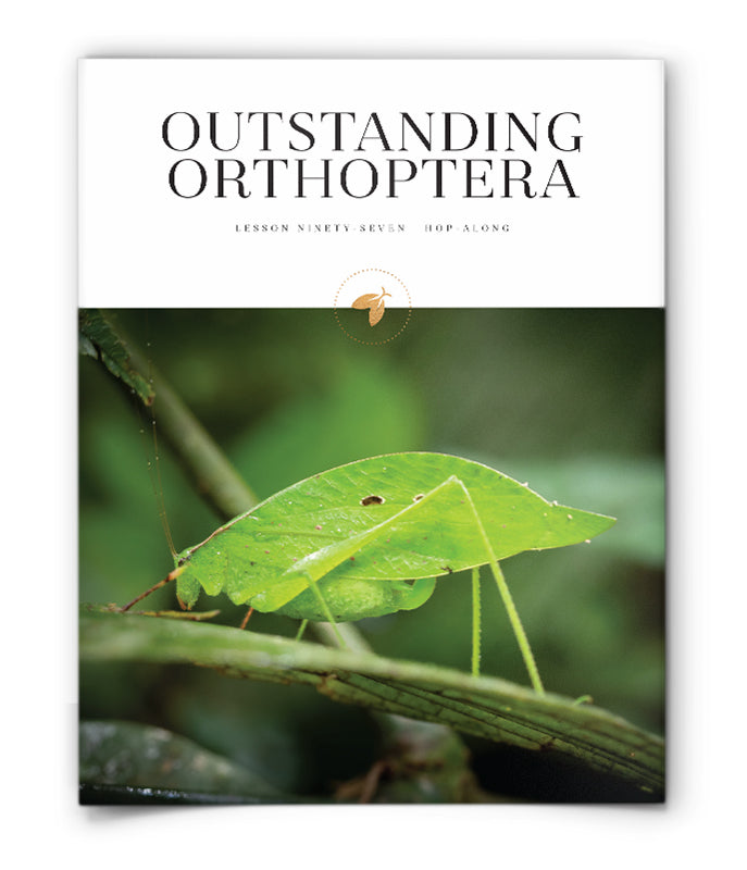 Outstanding Orthoptera