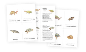 Flash Cards - Turtles!